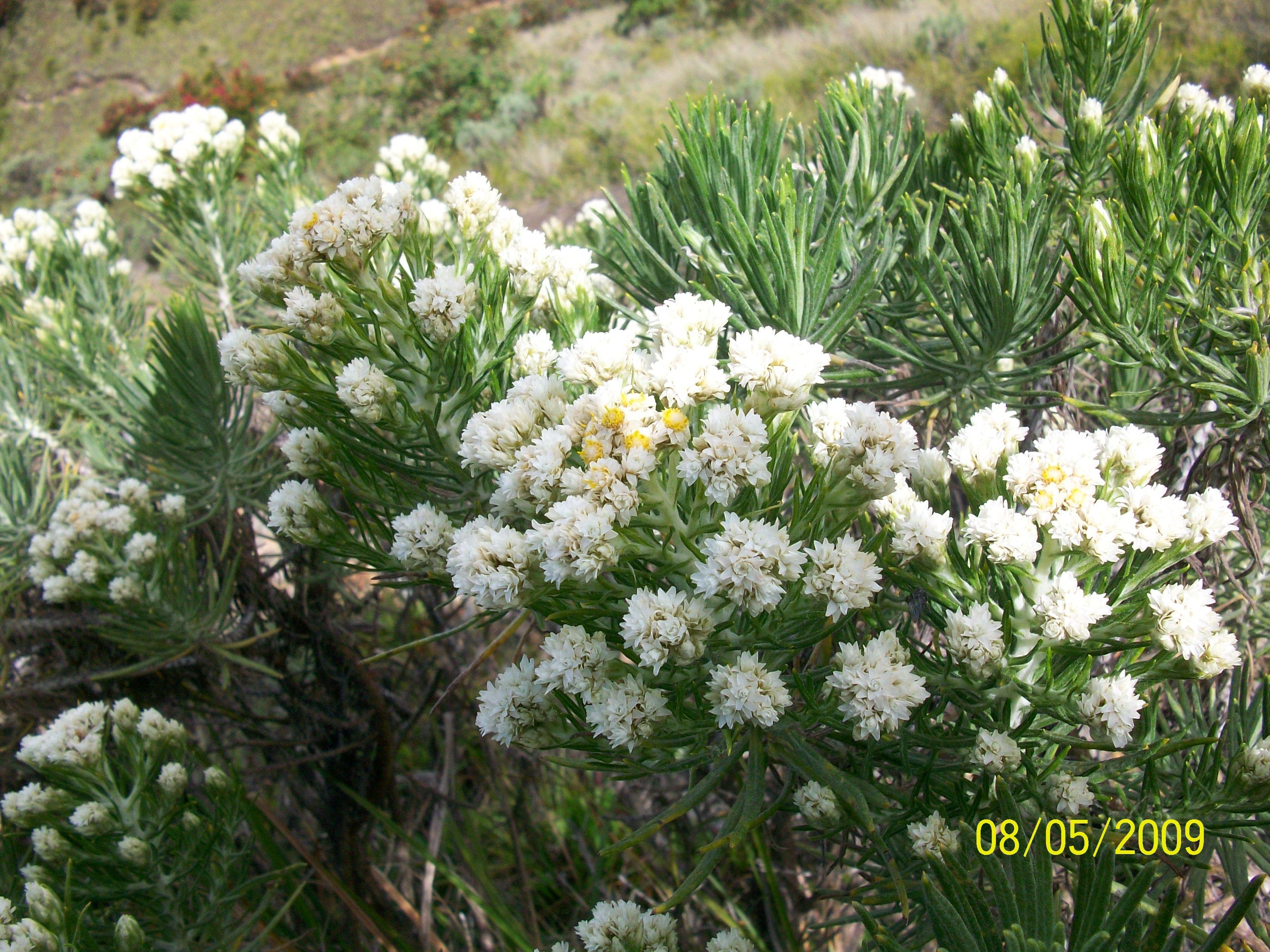 Jenis Gambar Flora Fauna Dan Alam Benda